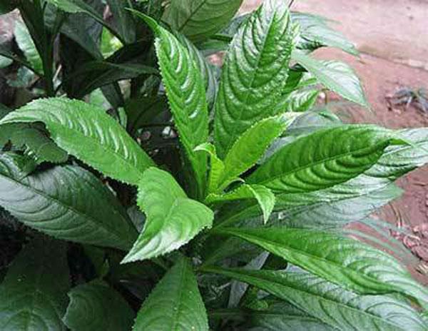 phuong-phap-chua-ho-cho-tre-so-sinh1-4