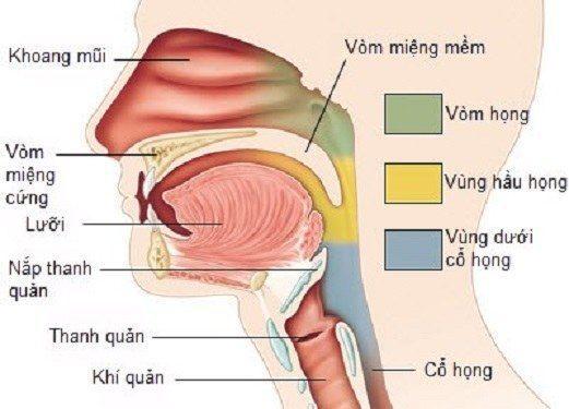 canh-bao-cac-bien-chung-nguy-hiem-tu-viem-vom-hong-2